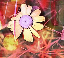 Beautifully Unbound Wild Daisy Floral Art Work by MissDawnM