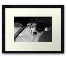 Shiner Dog~Pit Bull Mix Framed Print