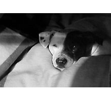 Shiner Dog~Pit Bull Mix Photographic Print