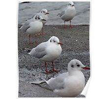 Matching Beaks and Feet Poster
