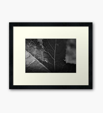 These lines tell a story.. Framed Print