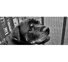 The Handsomest Rottie I Know Photographic Print