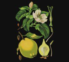 quince by Alex Magnus