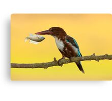 White-throated kingfisher with a fish in its beak Canvas Print