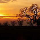Winter sunset in Cheshire  by vonniepyn