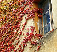 A Window In Eze by Fara