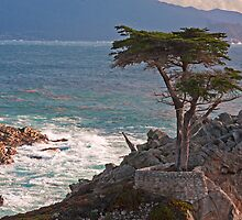 The Lone Cypress by Ron LaFond