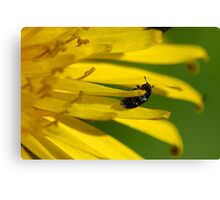 Weed and Weevil Canvas Print