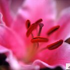 Pink Lily by Tamarra