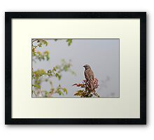 Will Sing For Seed Framed Print