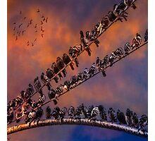 Pigeon Gangs Photographic Print