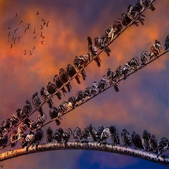Pigeon Gangs by Chris Lord