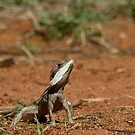 Ta Ta Lizard by Mark Ingram