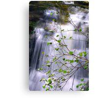 New Blossoms at Huron Falls in HDR Canvas Print
