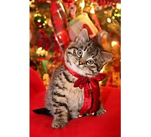 Christmas Kitten Photographic Print