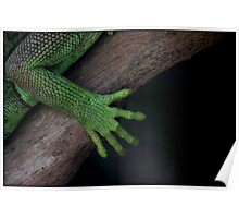 Iguana ~ these feet have been places Poster