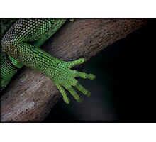 Iguana ~ these feet have been places Photographic Print