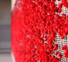 Poppies by Kaye Stewart