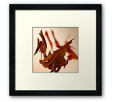 Red Leaves -Fall Foliage Series Framed Print