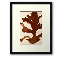 Oak Leaf -Fall Foliage Series Framed Print