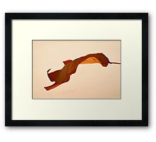 Maple Leaf -Fall Foliage Series Framed Print
