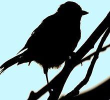 Bird Silhouette  by EmmatheSailor
