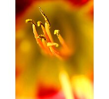 macro tulip flower centre Photographic Print