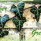 Ever Green by ©The Creative  Minds