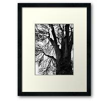 Woods Photograph Framed Print
