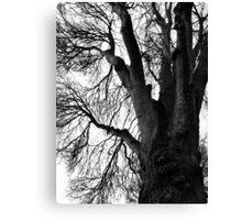 Woods Photograph Canvas Print