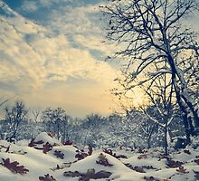 Winter Landscape by hitdelight