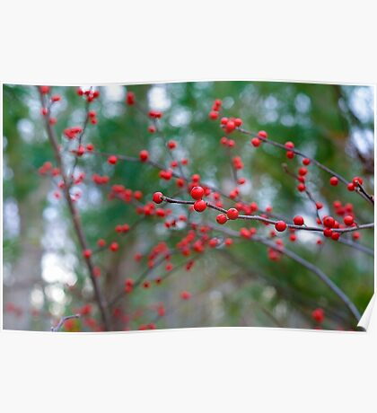 Red Spheres of Nature Poster