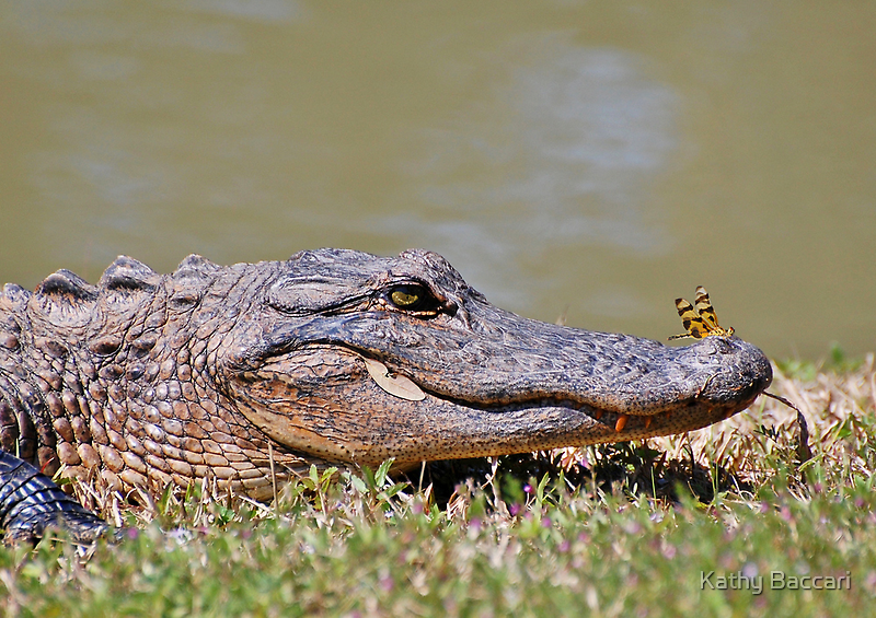 The Lazy Gator & The Dragonfly by Kathy Baccari