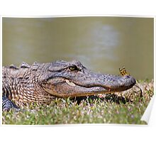 The Lazy Gator & The Dragonfly Poster