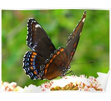 Fluttering butterfly wings Poster