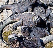 World of Iguana by DoctorPaul