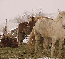 Winter Horses by UILFineArts