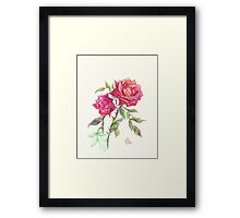 Miniature Red Roses in the Garden Framed Print