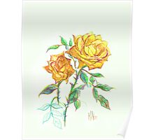 Golden Yellow Miniature Rose  Poster