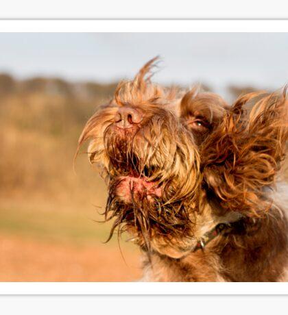 Brown Roan Italian Spinone Dog Head Shot Sticker