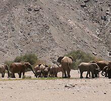 Desert Elephants Hoanib by kunene276