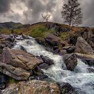 Winter Stream by Adrian Evans