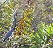 Tri Color Heron by Karen Harris