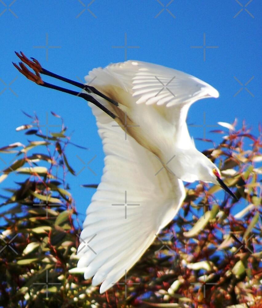 I am landing by loiteke