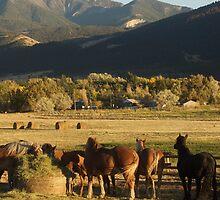 Hay & Horses by UILFineArts