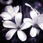 Tropical Plumeria by Karen Lewis