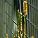 Rural fence by waxyfrog