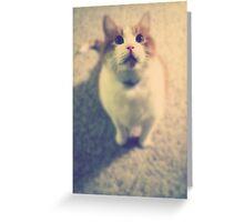 Pink Nose Greeting Card