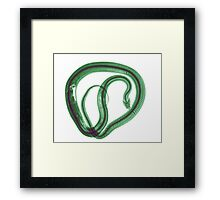 Snake under x-ray a whole mouse can be seen  Framed Print