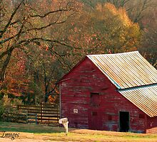 Berryvine Barn Fall by BerryvineImage